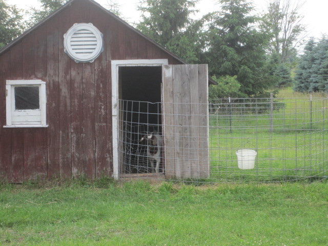 The girls kidding barn