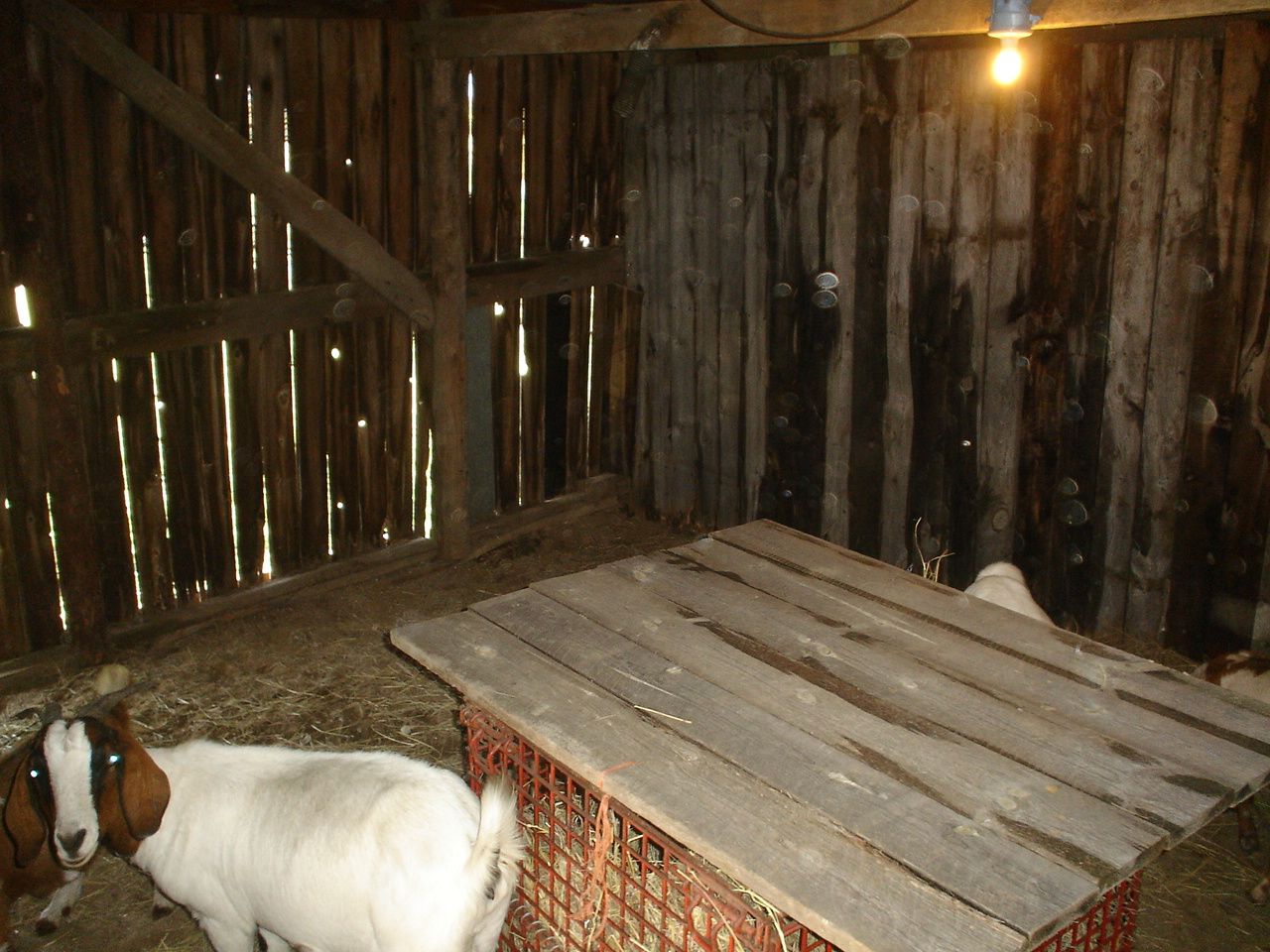 The main goat barn